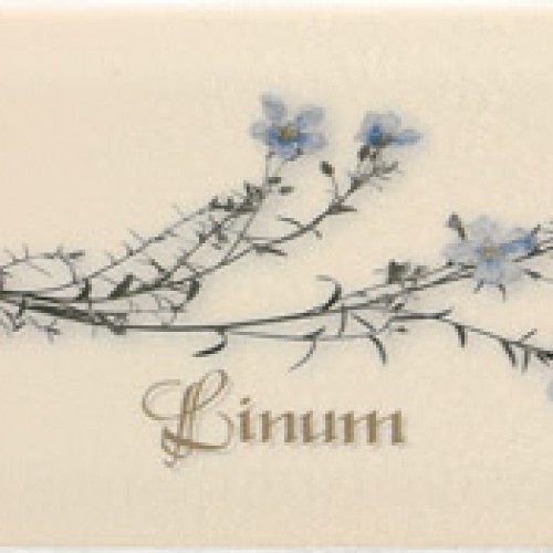 Decor Crema Linum 10*20